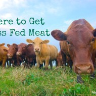Where to Get Grass Fed Meat